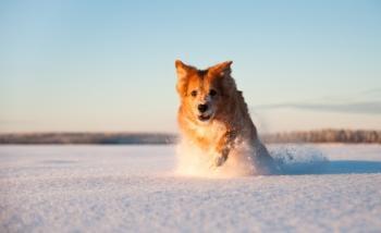 Maailman paras talvi valokuvakilpailun voitto-otoksen nappasi Jaakko Luokkanen. Onnistuneessa kuvassa on talvista riemua, kauniit värit ja onnistunut valotus.